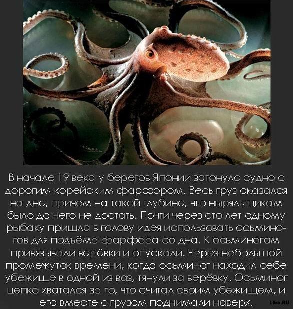 1256617743_1256591823_interesting_fact_26 (587x619, 102Kb)