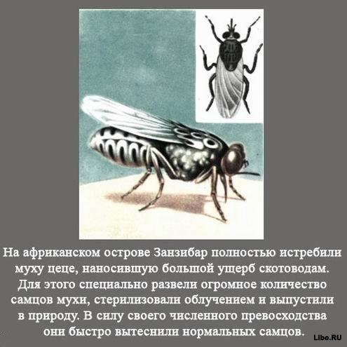 1256617756_1256591771_interesting_fact_28 (495x495, 43Kb)