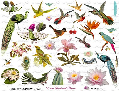 240  w ExOtiC BiRdS aNd fLoWeRs (400x305, 58Kb)