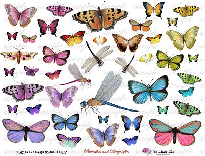 228 w  bUttERfLiEs aNd dRaGoNfLiEs (400x305, 59Kb)/4390899_228_w__bUttERfLiEs_aNd_dRaGoNfLiEs (400x305, 59Kb)