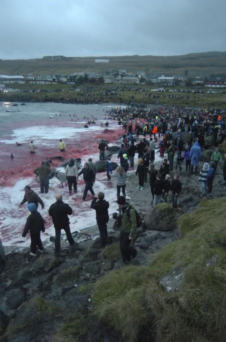 whale-slaughter-in-faroe-islands3-450x680 (450x680, 83Kb)