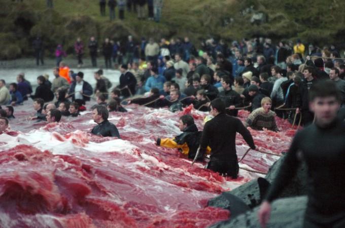 whale-slaughter-in-faroe-islands1-680x450 (680x450, 85Kb)