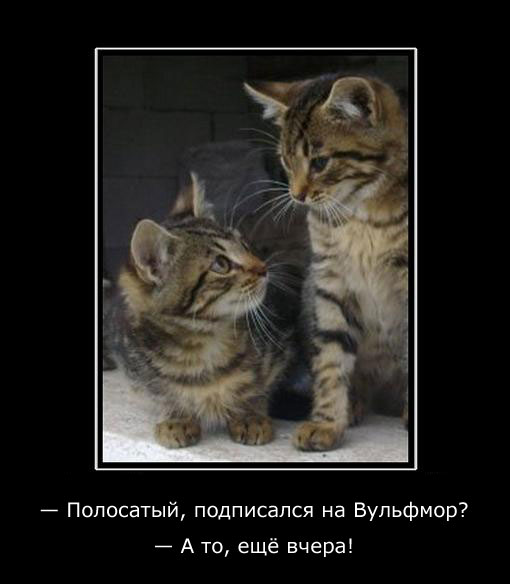 Вульфмор: самый свежий и актуальный юмор в Сети/4413077_wolfmordem10 (510x584, 34Kb)