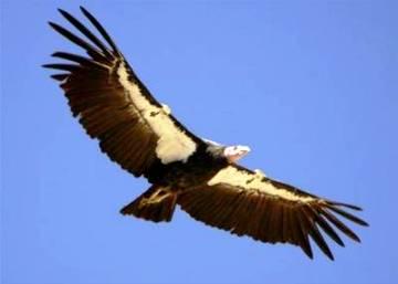 Гром-птица (360x257, 8Kb)