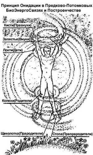 травник (300x497, 57Kb)