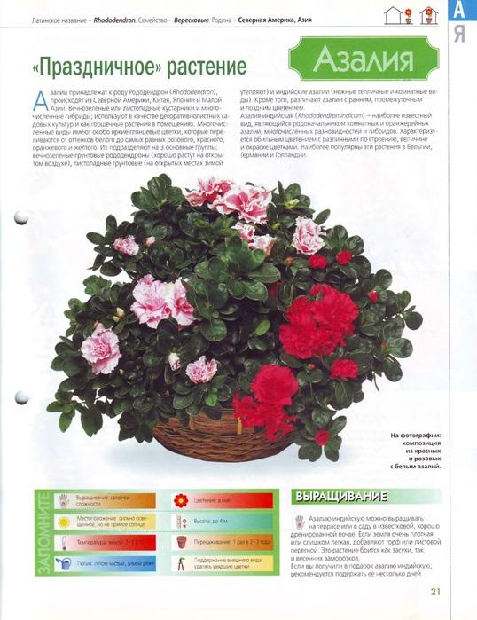 Комнатные и садовые растения (2)_2 (538x700, 136Kb)