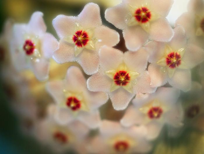 Цветы в Петербурге 28 (700x530, 85Kb)