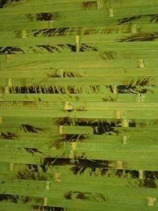 бамбук (224x300, 14Kb)