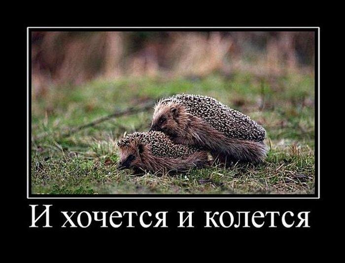 77766467_large_demotivatory_na_pjatnicu_31_foto_27 (700x534, 70Kb)