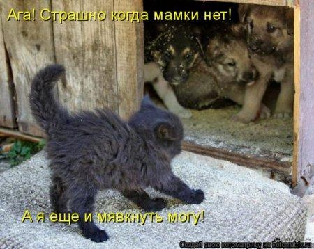 1307680357_kotomatrix_08 (450x358, 45Kb)