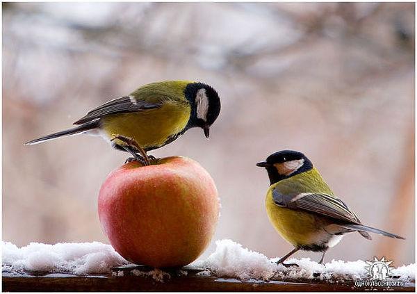 пувйы (600x423, 45Kb)