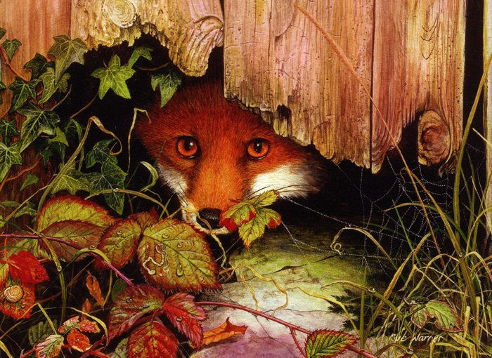 peeping-fox (700x510, 127Kb)