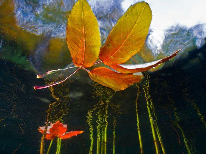 красивые фото National Geographic