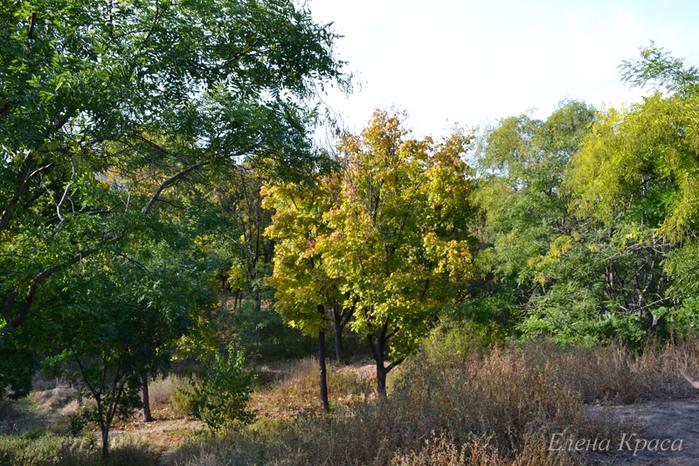 деревья в парке/4348076_2011oktyabr174pm (700x466, 214Kb)