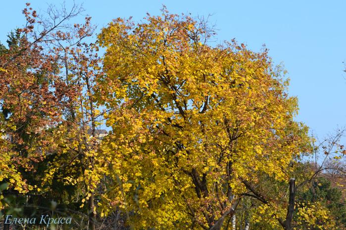 осенние деревья/4348076_5noyabrya11044pm (700x466, 247Kb)
