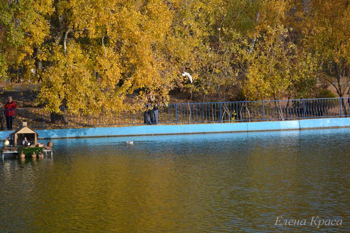 осенний пруд/4348076_5noyabrya11087pm (700x466, 209Kb)