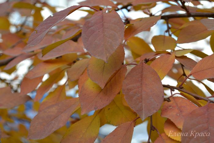 рыжие листья/4348076_20noyabrya11080pm (700x466, 225Kb)