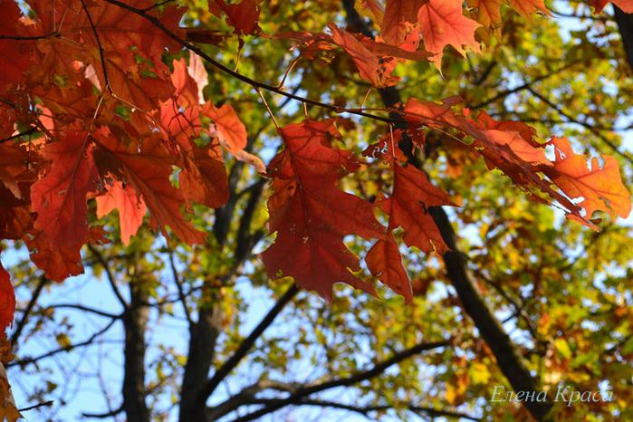 багряная листва/4348076_5noyabrya11030pm (700x466, 216Kb)