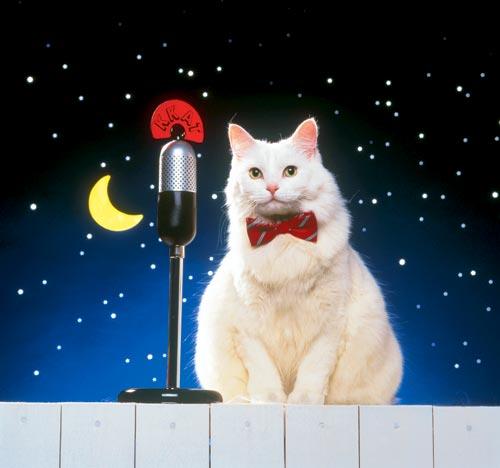 cat7 (500x468, 24Kb)