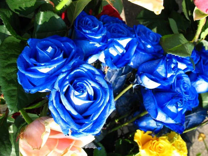 blue_rose_16 (700x525, 92Kb)