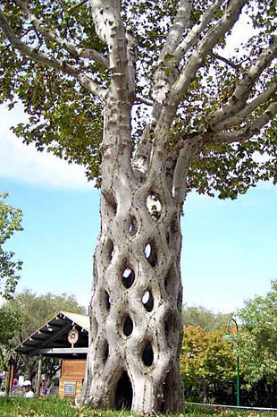 дерево (310x466, 59Kb)