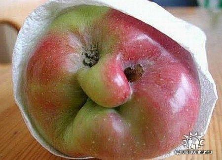 яблочко (450x325, 28Kb)