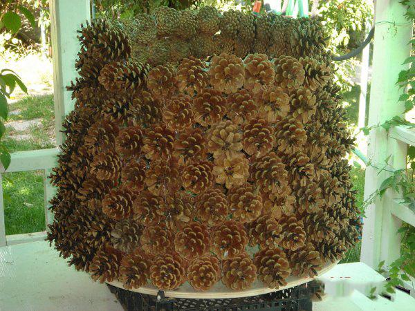 Новогодняя елка своими руками из шишек. :: Конец света в 2012 году. Предсказания судного дня