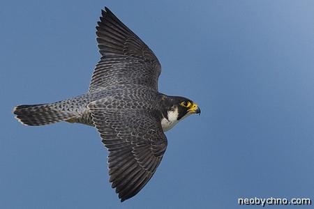ptica1 (450x300, 74Kb)