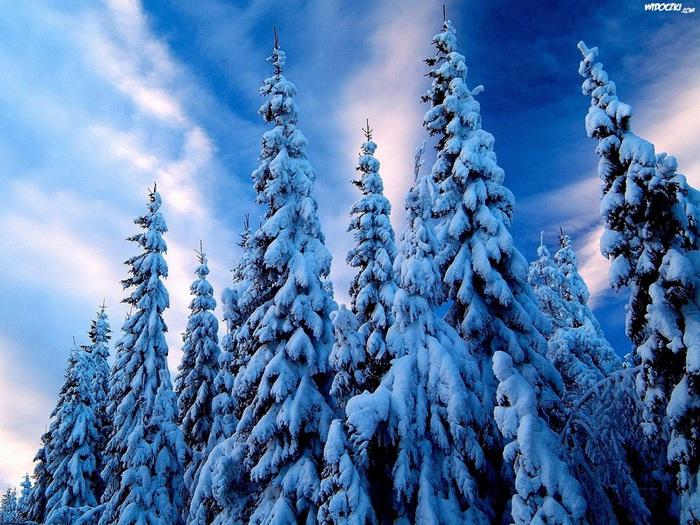 Зима мало (700x525, 192Kb)