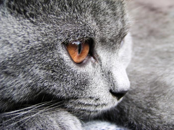 Кот думает