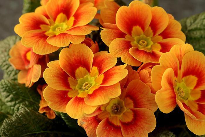 Цветок оранжевый фото 9