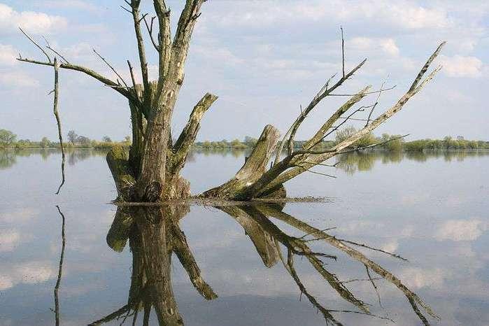 800px-Baum_im_Wasser 1 (700x466, 40Kb)