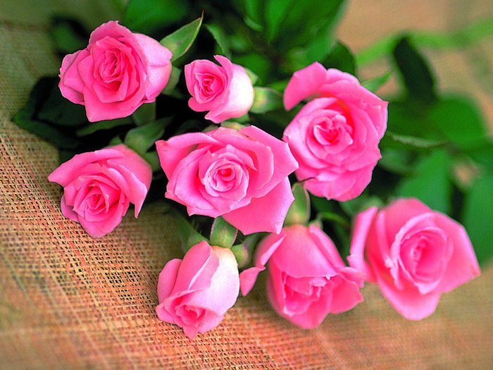 красивые розы (700x525, 162Kb)