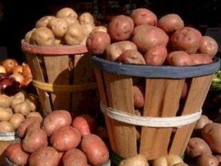 картошка (320x240, 27Kb)