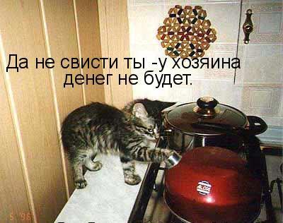 prikolnye-koty-i-sobaki-4 (400x316, 40Kb)