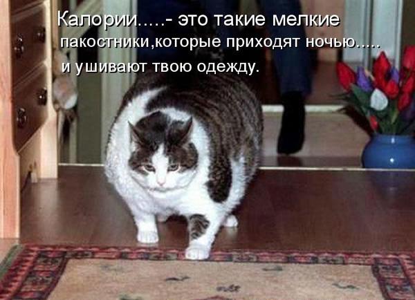 prikolnye-koty-i-sobaki-6 (600x434, 91Kb)