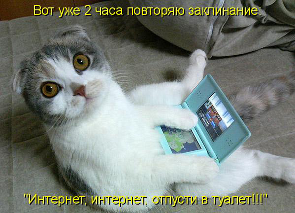 prikolnye-koty-i-sobaki-10 (599x432, 82Kb)