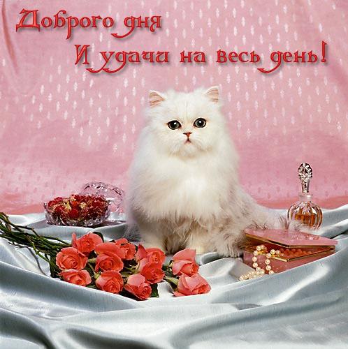 доброе утро с котятами картинки