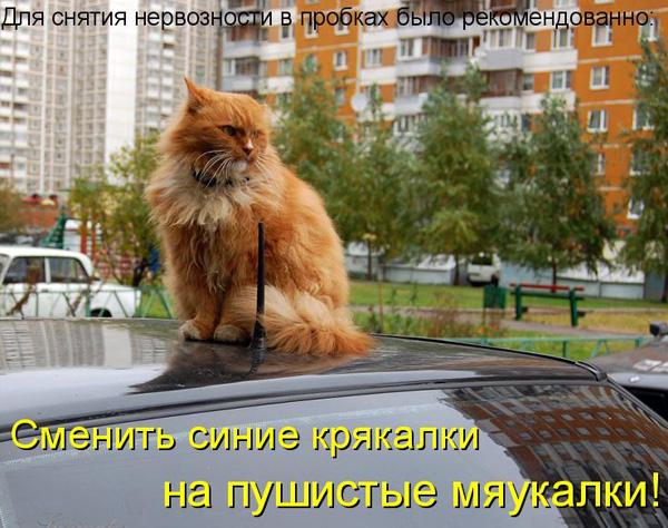 prikolnye-koty-i-sobaki-31 (600x474, 142Kb)