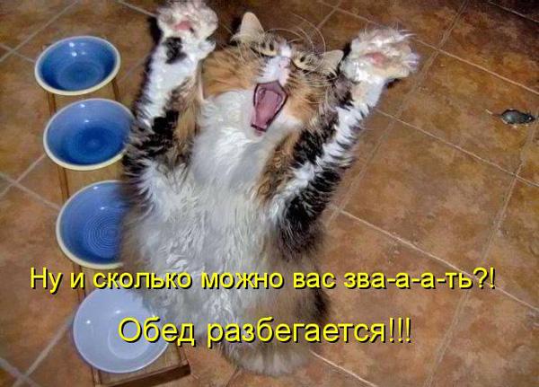 prikolnye-koty-i-sobaki-43 (600x431, 118Kb)