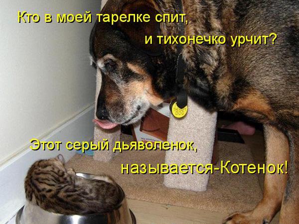 prikolnye-koty-i-sobaki-48 (600x450, 135Kb)