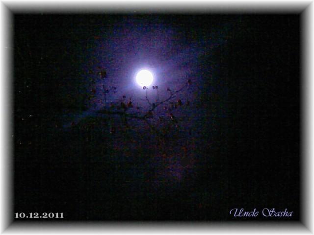 foto-0018.12.11.1 (640x480, 53Kb)