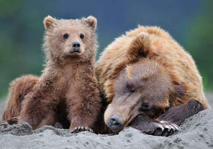 Ve diğer hayvanların sevimli halleri en şirin hayvan resimleri