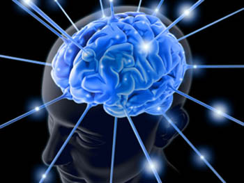 мозг (350x263, 36Kb)