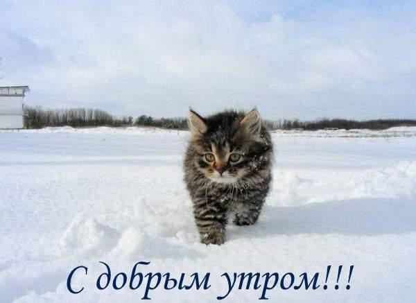 доброе_утричко.jpg1а (600x437, 23Kb)