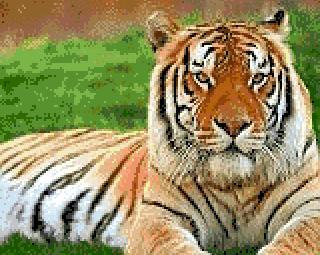 3937664_TIGR1 (320x255, 25Kb)