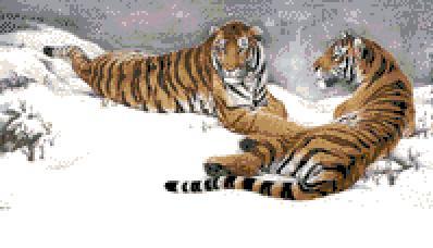 3937664_TIGRI1 (398x228, 18Kb)