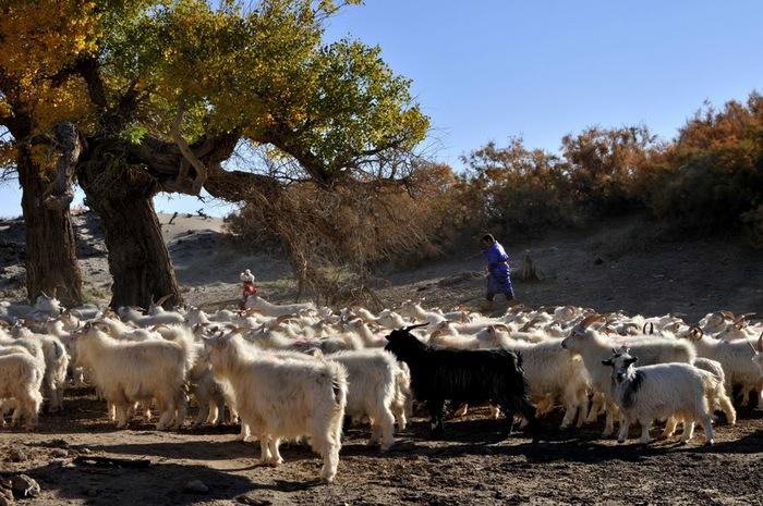 Геологический парк пустыни Алашань 88643