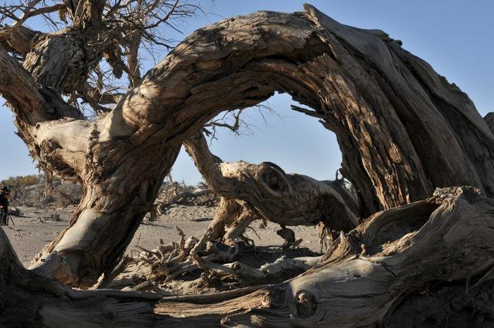 Геологический парк пустыни Алашань 44008