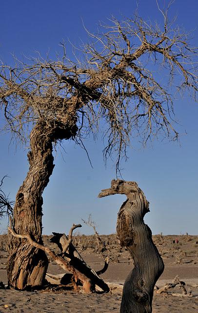 Геологический парк пустыни Алашань 49780